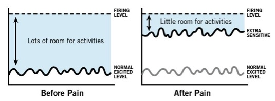 sensitive nerves action potential
