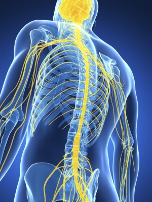 From Degenerative Disc Disease to Central Sensitization: A Paradigm Shift